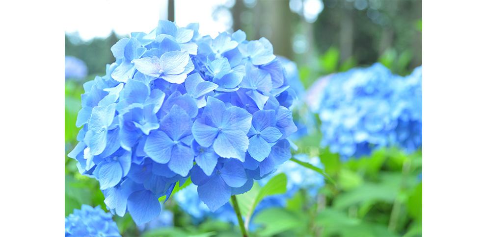【京都】三室戸寺に行ってきました。